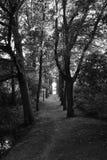 Majestätiska träd som bildar en tunnel Fotografering för Bildbyråer