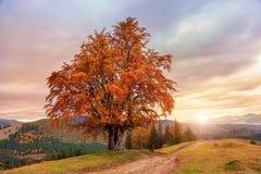 Majestätiskt landskap med höstträd i skog Arkivfoton