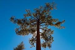 Majestätiskt träd i Los-fältpräster Royaltyfri Fotografi