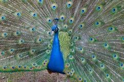 Majesté de couleurs Image stock