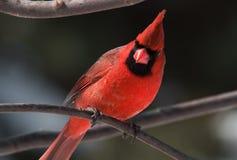 Majesté rouge images libres de droits