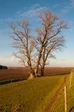 majestätiska trees för base dike Royaltyfria Bilder