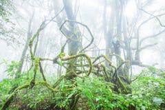 Majestatyczna czysta natura, świeży mech i liszaj w korzeniu starzy drzewa, antyczny tropikalny las w mgieł tło _ obrazy royalty free
