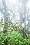 Majestatyczna czysta natura, świeży mech i liszaj w korzeniu starzy drzewa, antyczny tropikalny las w mgieł tło _ zdjęcia stock
