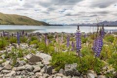 Majestatyczna góra z llupins kwitnie, Jeziorny Tekapo, Nowa Zelandia Obrazy Royalty Free