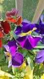 Majestatyczni kwiaty Obrazy Stock
