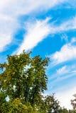 Majestatyczny cisawy drzewo z pięknymi chmurami na tle Zdjęcia Stock