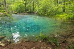 Majestatyczny czysty jezioro w lesie, Ochiul Bei, Beusnita park narodowy, Rumunia Fotografia Stock