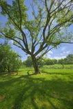 Majestatyczny drzewny kasting cień Zdjęcie Stock