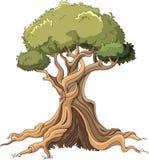 Majestatyczny drzewo Zdjęcia Stock