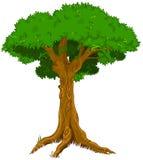 Majestatyczny drzewo ilustracji