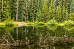 Majestatyczny halny jezioro w Obsługiwać parka, kolumbiowie brytyjska, Kanada Obrazy Royalty Free