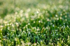 Majestatyczny pogodny ranek, abstrakcjonistyczne i marzycielskie zamazane traw krople rosa Obrazy Royalty Free