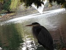 Majestatyczny ptak zdjęcia stock
