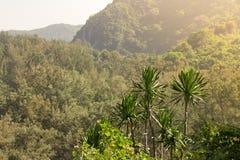 Majestatyczny słońce osiąga szczyt nad szczytami w tropikalnym położenie dowcipie obraz royalty free