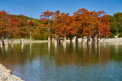 Majestatyczny Taxodium distichum stojak w wspaniałym jeziorze przeciw tłu Kaukaskie góry w spojrzeniu jak gol i spadku obraz royalty free