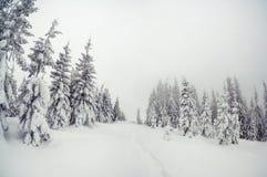 Majestatyczny zima krajobraz Obrazy Stock