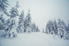Majestatyczny zima krajobraz Obraz Royalty Free