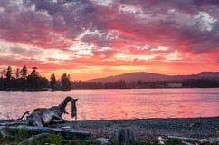 Majestatyczny zmierzch nad wybrzeżem Vancouver wyspa, Kanada Obraz Stock