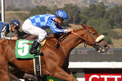 Majestic Afleet Breaks His Maiden. ARCADIA, CA - OCT 24: 'Majestic Afleet', under jockey Alex Solis, breaks his maiden on his first try at Santa Anita Park, 10 Royalty Free Stock Photo