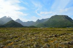 Majestic bog landscape with light foggy mountain in background. In summer Royalty Free Stock Photo