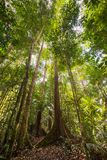 Majestic Borneo rainforest from below Stock Photo