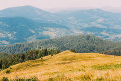 Majestic carpathian pine forest hills landscape with yellow meadow at foreground Royalty Free Stock Photography