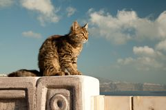 Majestic cat posing on wall in Greek island Stock Photography