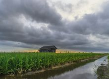 Majestic clouds when sunset near paddy field. An abandon house near the paddy field overlooking the majestic clouds in the skies during sunset Royalty Free Stock Images