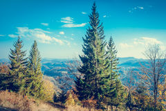 Majestic colorful forest Stock Photo