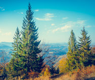 Majestic colorful forest Stock Photos