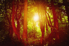 Majestic colorful forest with sunny beams. Dramatic evening fore Stock Photo