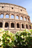 Majestic Colosseum in Rome against blue sky, Italy Royalty Free Stock Images