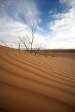 Majestic dune landscape Royalty Free Stock Images