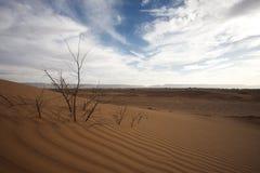 Majestic dune landscape Stock Photos