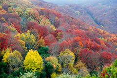 Majestic fall colors Royalty Free Stock Photography