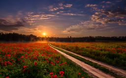 Majestic foggy sunrise over the poppy field. road to sunset. Majestic foggy sunrise over the poppy field. picturesque scene. colorful sky with overcast clouds Stock Photos