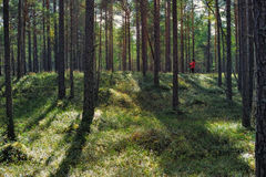 Majestic Forest Stock Photography