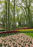Fairytale forest garden with stream and colorful tulips stock photos