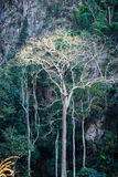 Majestic giant jungle tree, amazing forest background Stock Images
