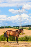 Majestic graceful brown horse in meadow. Stock Photos