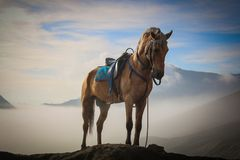 Majestic graceful brown horse stallion on top of a mountain surrounded by clouds and blue sky. Saddle on and looking powerful Royalty Free Stock Image