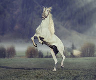 Majestic horse jumping on the green meadow Stock Photo
