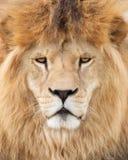 Majestic king Royalty Free Stock Photo