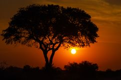 MAJESTIC KRUGER SUNSET 01 royalty free stock photo