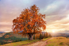 Majestic landscape with autumn trees in forest. Stock Photos