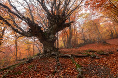 Majestic landscape with autumn trees in forest. Stock Image