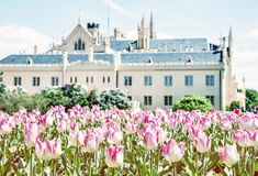 Majestic Lednice castle with flowering tulips, beauty filter. Majestic Lednice castle with flowering tulips, southern Moravia, Czech republic. Travel destination royalty free stock photography