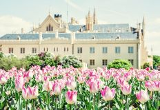 Majestic Lednice castle with flowering tulips, southern Moravia. Czech republic. Travel destination. Beautiful place. Yellow photo filter stock photography