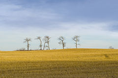 Majestic Lonely trees Stock Photos